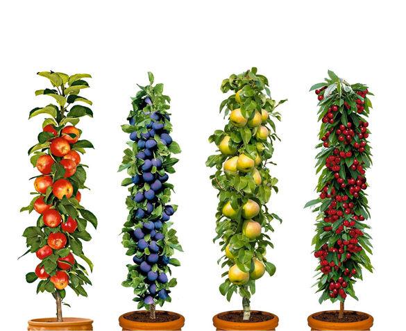 Set van 4 Fruitbomen